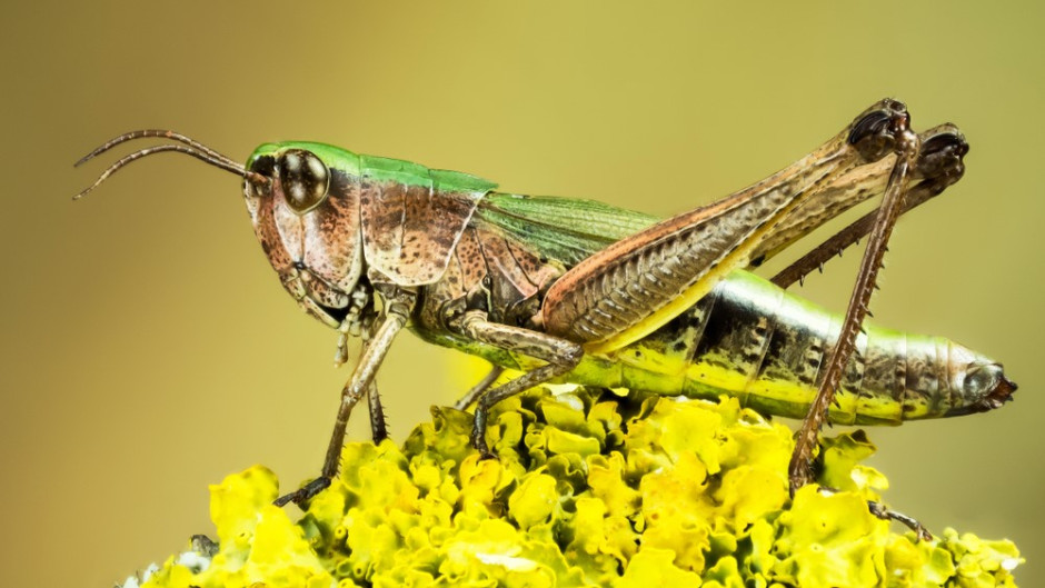 frontiers-in-nutrition-insect-antioxidants