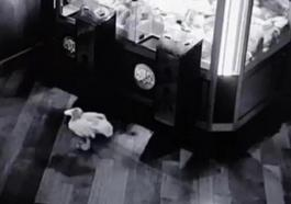 1_Real-life-Toy-Story-moment-CCTV-shows-spooky-goings-on-at-Nottingham-bar-tile