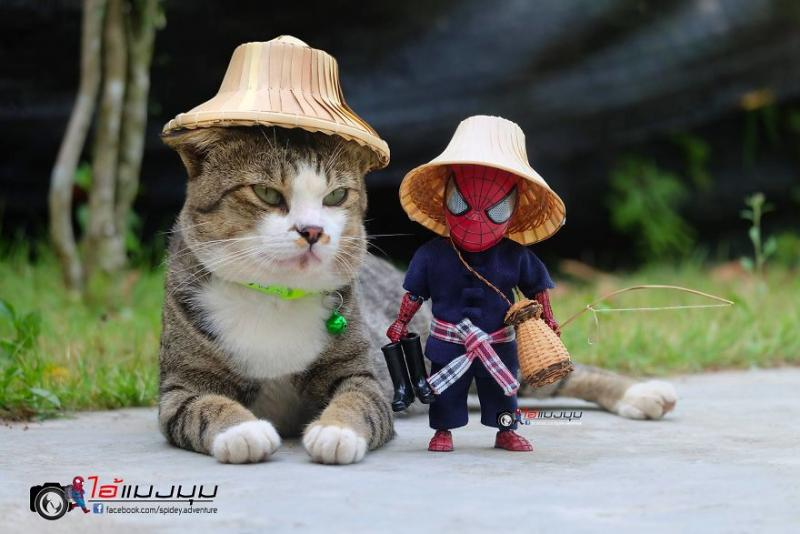 See-the-adventures-of-a-mini-spiderman-with-lovely-cats-created-by-a-Thai-artist-5ddb9000634f9__880
