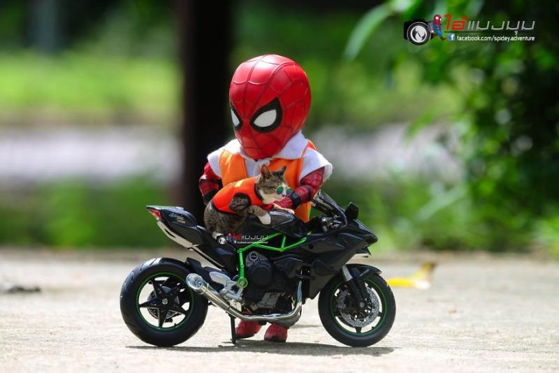 See-the-adventures-of-a-mini-spiderman-with-lovely-cats-created-by-a-Thai-artist-5ddb9005dad40__880